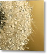 Sun Sparkled Dandy Metal Print