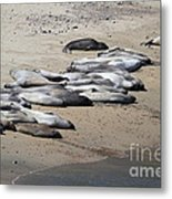 Sunbathing Elephant Seals Along A Beach At Point Reyes California . 7d16063 Metal Print by Wingsdomain Art and Photography