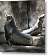 Sunbathing Seals Metal Print