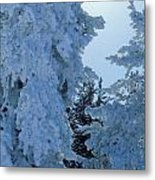 Sunburst In Yellowstone Metal Print