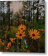 Sunburst On Sunflowers Metal Print