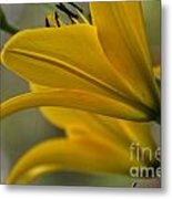 Sundrenched Metal Print