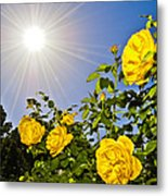 Sunflare And Yellow Roses Metal Print by Amber Flowers