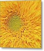 Sunflower 2881 Metal Print
