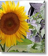 Sunflower And Barn Metal Print
