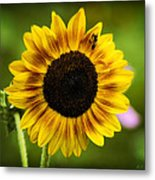 Sunflower And Bee Metal Print