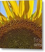 Sunflower Arch Metal Print