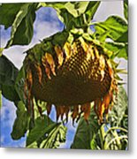 Sunflower At Fall Metal Print