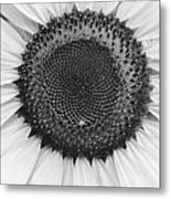 Sunflower Center Black And White Metal Print