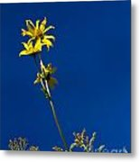 Sunflower Delight Metal Print