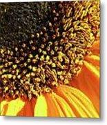 Sunflower Edge Metal Print