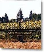 Sunflower Farm Scene Metal Print