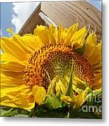 Sunflower In The Breeze Metal Print