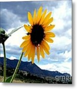 Sunflower In The Rockies With Friends Metal Print by Donna Parlow