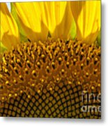 Sunflower Macro Metal Print