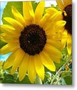 Sunflower Medley Metal Print