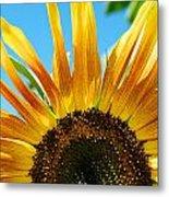 Sunflower Meets Sky Metal Print