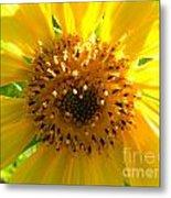 Sunflower No.10 Metal Print