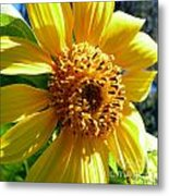 Sunflower No.19 Metal Print