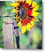 Sunflower On A Stick Metal Print