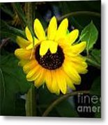 Sunflower One Metal Print