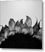 Sunflower Rising #1 Metal Print