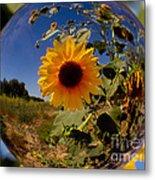 Sunflower Through A Glass Eye Metal Print