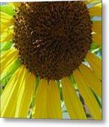 Sunflower-two Metal Print
