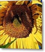 Sunflower Up Close Metal Print