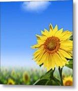 Sunflowers, Artwork Metal Print