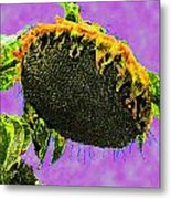 Sunflowers Birmingham Digital Metal Print