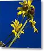 Sunflowers In The Sky Metal Print