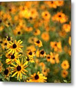 Sunflowers Metal Print by Michelle Peric