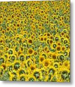 Sunflowers Metal Print by Ron Smith