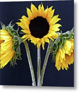 Sunflowers Three Metal Print