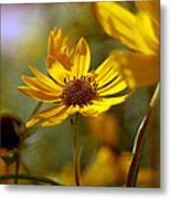 Sunkist With Solitude Metal Print
