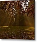 Sunlight And Leaves Metal Print
