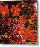 Sunlight Autumn Leaves Metal Print