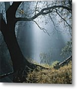Sunlight Beams Through The Treetops Metal Print