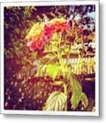 #sunlight #beautiful #flower Metal Print