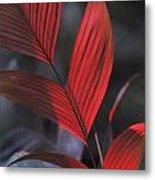 Sunlight Illuminates The Red Leaves Metal Print