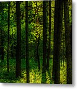Sunlight In Forest Metal Print