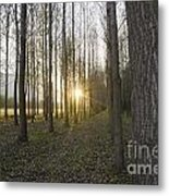 Sunlight In The Forest Metal Print