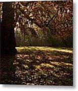 Sunlight In Trees Metal Print