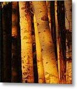 Sunlight On Aspen Trees, Twin Falls Metal Print