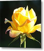 Sunlight On Yellow Rose Metal Print