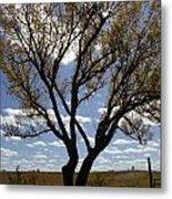 Sunlight Through The Tree Metal Print