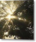 Sunlight Through Tree Cahir, County Metal Print