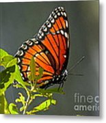 Sunlight Viceroy Metal Print