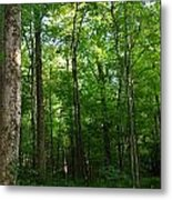 Sunlit Forest Metal Print